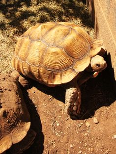 Some tortoies live in warm places. They mostly live every where but Antarctica.