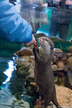 """""""It's okay, human. I'm here for you."""": http://dailyotter.org/2014/06/06/its-okay-human-im-here-for-you/"""