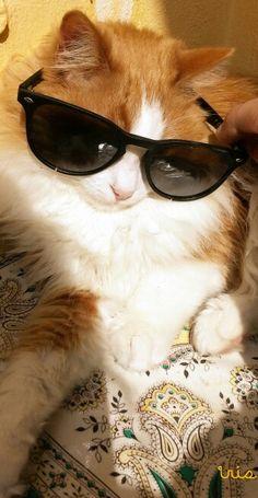 The boss of sunbathing :D <3