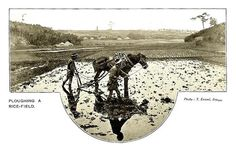 PLOUGHING A RICE FIELD in OLD JAPAN
