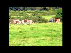 Gravity FM Heritage Project, Helen Anderson visits Southfields Farm in Somerby home of Jane and Mark Barnes, come on the audio tour with them round the farm . Tours, Horses, Videos, Painting, Animals, Animales, Animaux, Painting Art, Paintings