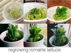 25 Amazing DIY Kitchen scraps (vegetables, fruits, herbs) that you can re-grow - GoWritter
