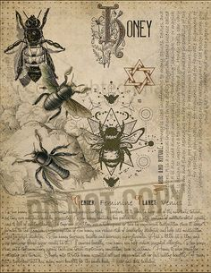 Honey Magic Plant Knowledge has a long history and has a place in the modern witch book of shadows. Magic Herbs, Herbal Magic, Magick Spells, Witchcraft, Wiccan Spell Book, Grimoire Book, Libros Pop-up, Witch Herbs, Modern Witch