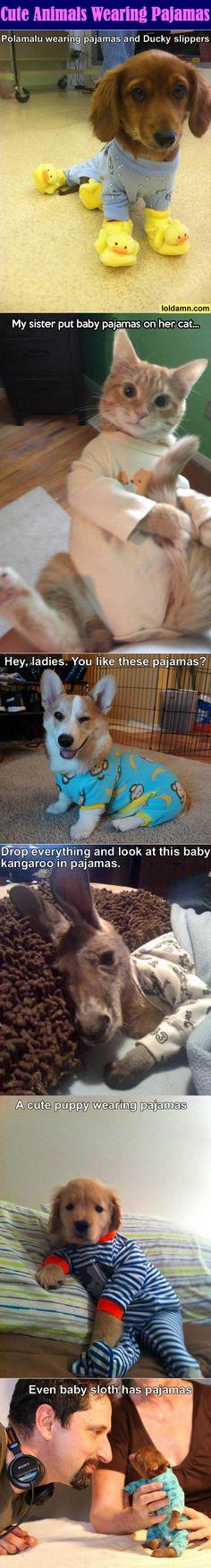 Cute Animals Wearing Pajamas. @Katie Hrubec Hrubec Parler @Amy Lyons Lyons Burton
