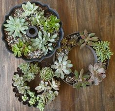 Succulent planters from old, scratched fancy bakeware. Would I actually do this?