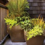Beautiful container plantings for your deck, entryway, or yard