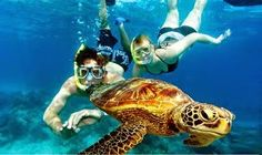 Sightseeing Tours Australia: Find your Dream Paradise on Green Island