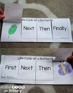 Flip Book For The Sequencing Of A Butterfly Life Cycle.