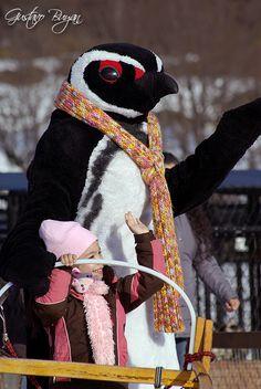 Pinguino en centro invernal, Ushuaia