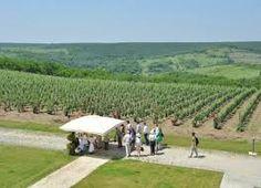 Image result for romania wine