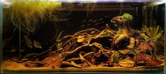 2 Hr. Aquarist guide to Low Tech Tank - awesome guide.