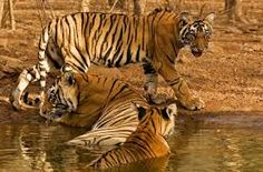 Temple and Tiger Tour - Bandhavgarh National Park India Travel, Wilderness, Temple, National Parks, Wildlife, Tours, Explore, Water, Animals