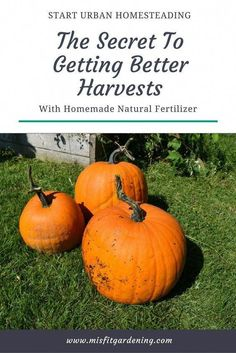 Learn the Secret to Getting Better Harvests with Homemade Natural Liquid Fertilizer - Misfit Gardening Liquid Fertilizer, Organic Fertilizer, Organic Gardening, Gardening Hacks, Vegetable Gardening, Container Gardening, Kill Weeds Naturally, Acid Loving Plants, Soil Improvement