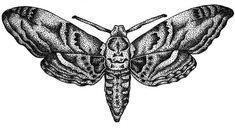 Old school moth - Temporary tattoo