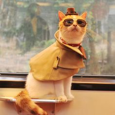Cool cat Kitten In Costumes playing detective with sunglass and hat.