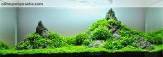 AKUARIUM UNIK: Bisnis aquascaping, memperindah aquarium bernilai ...
