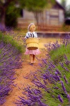 una Niña paseando por Campos de Lavanda
