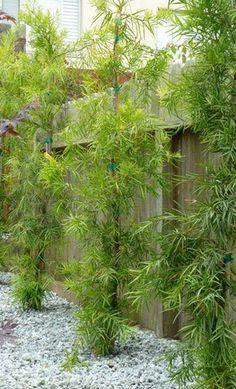 San Francisco Landscaping Plants Directory Side Yard Landscaping, Landscaping Plants, White Oak Tree, Dry Garden, Garden Plants, House Plants, Drought Tolerant Landscape, Patio Layout, Planting Plan