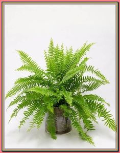(paid link) Toxic and Non-Toxic Plants #catsafehouseplants