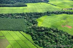 Kericho tea plantation photo with great lines and textures. Kenya Tourist Board on Rediscovering Africa Wiki.