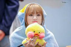 My kiyowo duck🐥💛 Yu Jin, Baby Ducks, Yuehua Entertainment, Japanese Girl Group, First Baby, The Wiz, 3 In One, Kpop Girls, My Idol