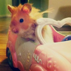 Reminds me of my old barbie car.. Aww how cute