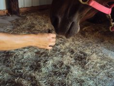 Essential Oils for Equine Allergies: A list of oils beneficial for skin or lung allergies in horses.