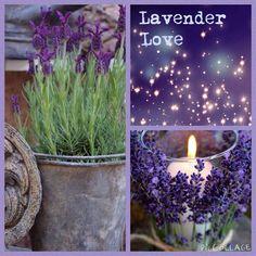 Lavender Hedge, Lavender Decor, Lavender Cottage, Lavender Garden, Lavender Blue, Lavender Fields, Purple Lilac, Shades Of Purple, Collages