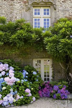 patio gallego,lindamente decorado con plantas y floresss...