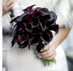 Fabulous deep purple calla lilies. How perfect for a winter wedding!