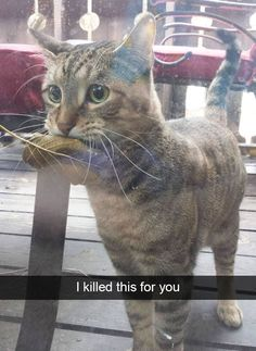 37 Hilarious Animal Snaps to Help Restore Your Faith in Humanity - Cheezburger - Cat memes, funny animals, and cute dogs.