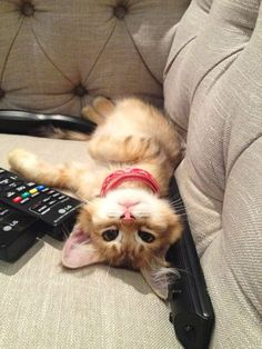 テレビを見るのを邪魔する猫12