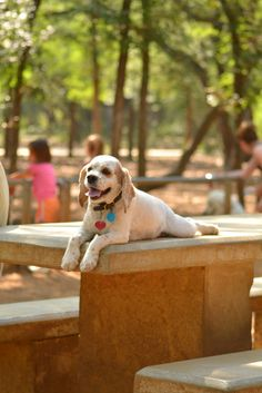At the Dog Park sheerheart.org