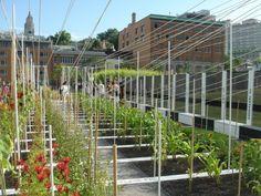 Boustrophedon Garden / PLANT Architect