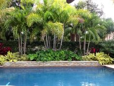 Creating a tropical oasis with limited space can be challenging for most people. Make sure to use root barrier for all trees and palms when you are planting near pools and decks. Root barrier will feed the root-system of trees and palms while guiding them Plants Around Pool, Landscaping Around Pool, Tropical Pool Landscaping, Pool Plants, Tropical Backyard, Backyard Plants, Backyard Landscaping, Pool Backyard, Landscaping Ideas