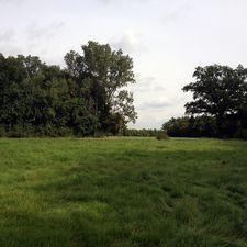 So sind schon drei komplette Wälder in Deutschland entstanden, der vierte ist gerade in Aufforstung.