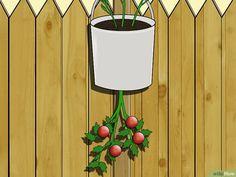 Image titled Make an Upside Down Tomato Planter Step 8