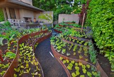 Cor-Ten Raised Beds - contemporary - landscape - seattle - Exteriorscapes llc