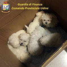 Scoperto traffico di cuccioli provenienti dall'est Europa: due arresti | Report Campania
