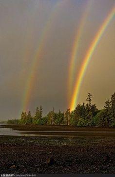Quadruple Rainbow Over The Forest
