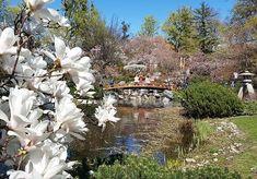 Segatayapark ogród japoński jest właśnie mocno oblegany bo kwitną wiśnie i magnolie. Architektura samego ogrodu już przyciąga. Jeszcze parę dni i będzie za późno na urocze zdjęcia magnoli. :) #magnolie #park #wien #vienna #wiedeń #kochamwiedeń #wiosna Vienna, House Styles, Austria, Plants, Instagram, Decor, Magnolias, Decoration, Plant