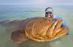 Want to catch a grouper? Learn the best tips and tricks right here.