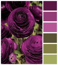 Purple and green ['deep purple plum blanket' against green...maybe brighter green]