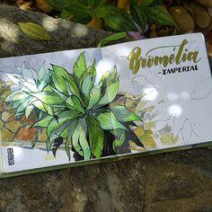 Primeiro #desenho em 2017! |||  Первые зарисовки нового года. |||  #рисуйкаждыйдень #рисунок #sketch #sketchbook #art #topcreator #art_we_inspire #tropic #botanica #plants #jungle #illustration #copicmarkers #copicbrasil #brasil #vscobrasil #vscocam #instaart #caligrafia #lettering #calligraphy #markers #copics #sketchzone #eunadraw