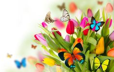 nature, spring, flowers, tulips, butterfly, wings, collage