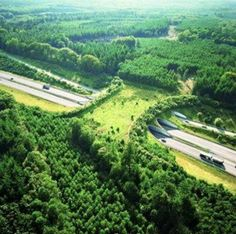 Amazing wildlife bridge to help animals cross the motorway in the Netherlands!