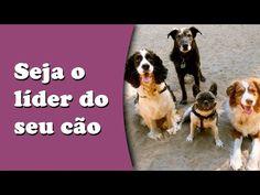 tudosobrecachorros.com.br 9-erros-que-donos-cometem-na-hora-de-cuidar-dos-cachorros