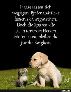 funny picture 'Life means. png' - One of 15752 files in the category - Erinnerung sprüche - Katzen Funny Animal Videos, Funny Animals, Cute Animals, Dog Videos, Cute Cats, Funny Cats, Funny Jokes, Facebook Humor, Image Facebook