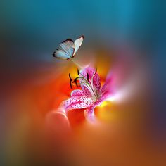 Captivating Light by Josep Sumalla on 500px