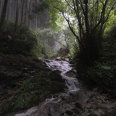 【saitoushigeaki】さんのInstagramをピンしています。 《今年も終わりますね。来年も楽しい年になれば良いのですが(^_^;) 画像の整理して出て来た写真をアップします。場所は私のお気に入りな金剛山です。非公式なルート石ブテ西谷、悪天候の中で荒々しい自然の中を歩くのは楽しかったです(^_^) #登山 #ハイキング #渓谷 #森 #沢歩き #金剛山 #川 #自然 #雨 #森林 #mountaineering #hike #ravine #forest #river #natural #itrains》
